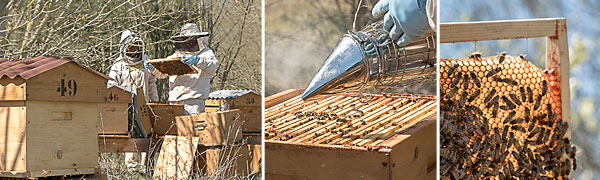 roulottes-miel-abeilles